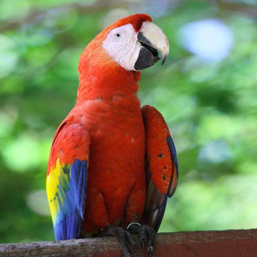 Image005_Guanacaste